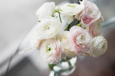Die schönsten Frühlingsblumen